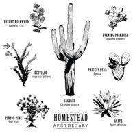 DesertPlants_Tote-01 copy
